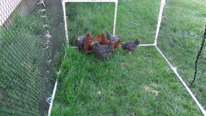 Mobilen Hühnerstall kaufen