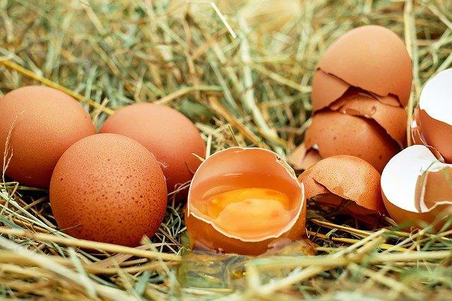 Tipps gegen Eierfressende Hühner